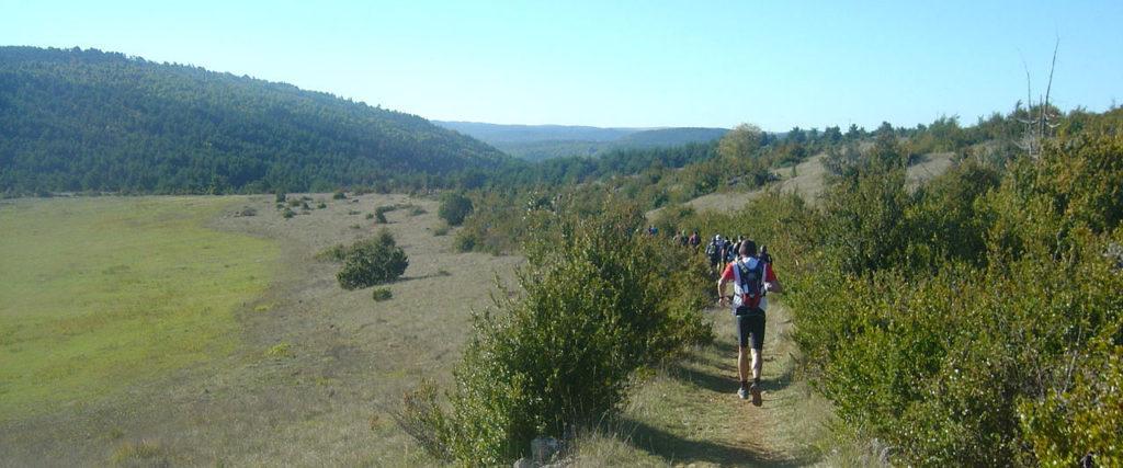 Paysage nature et forestier sur le parcours du Grand Trail des Templiers